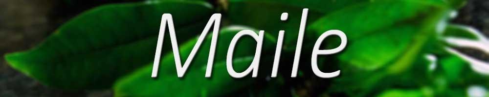 Big Island Maile Lei